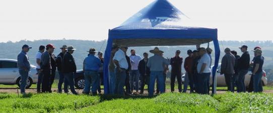 Encontro técnico reuniu agricultores cooperativistas na Embrapa Trigo