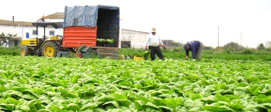 Programa Aprendiz Cooperativo do Campo é selecionado entre os melhores casos de inovação na agricultura familiar