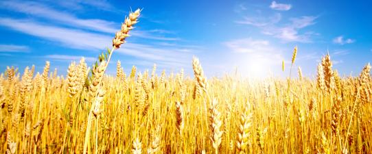 Governo amplia possibilidade de acesso de cooperativas agro ao Pronaf