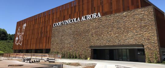 Vinícola Aurora celebra 89 anos com faturamento histórico de R$ 558 milhões