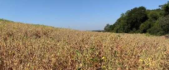 Safra de soja no Rio Grande do Sul terá perda de 46,6%