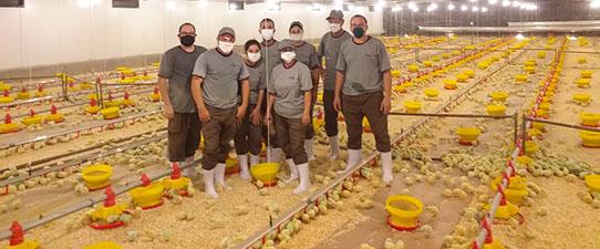 Condomínio Vespasiano Corrêa é o primeiro a alojar pintos para o abate em frigorífico da Dália Alimentos