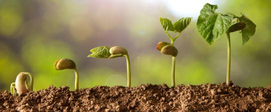 Cooperativas podem se inscrever para o Prêmio Vencedores do Agronegócio