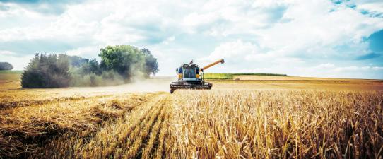Live debate cenários e tendências para culturas da soja e do trigo