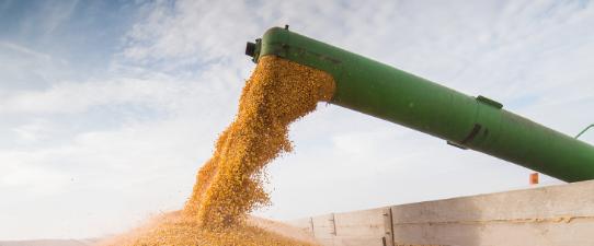 Languiru recebe produção de grãos na Região dos Vales