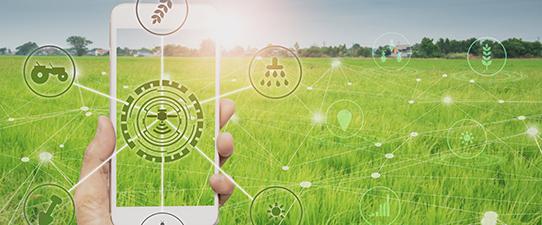 Rastreabilidade agrícola apoiada por aplicativo de cadernos de campo