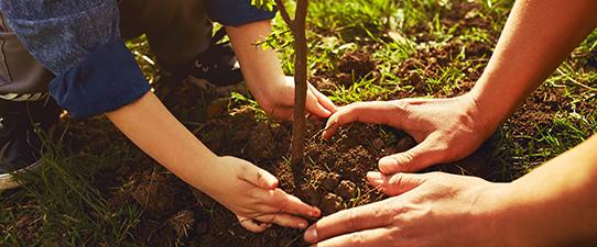 Agricultura familiar: decreto amplia participação em programas do governo