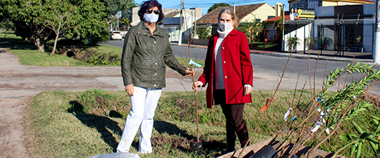 Unimed planta 50 árvores em Pelotas