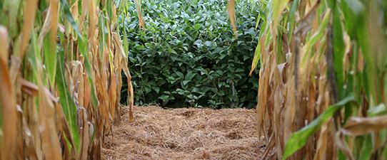 Webinar apresenta cenários do mercado da soja e do milho