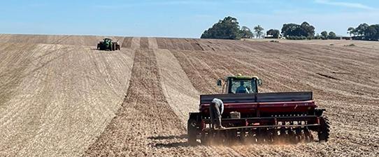 Custo do trigo tem alta de 31% mas relação de troca é favorável