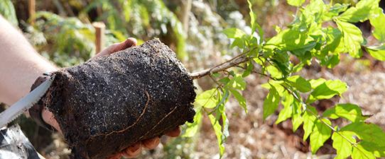 Ceriluz aprova projeto de recuperação florestal