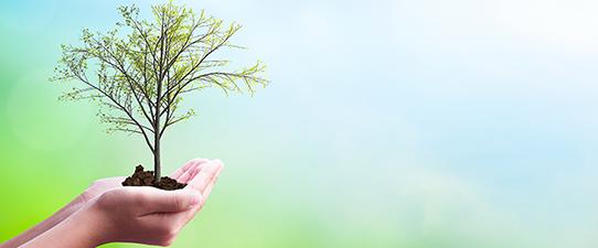 Unimed Pelotas/RS plantará 100 árvores em Pelotas