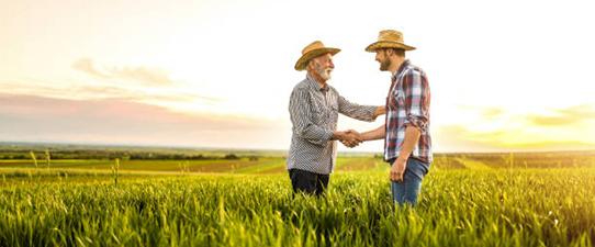 Cotribá paga bonificação aos associados pela soja comercializada